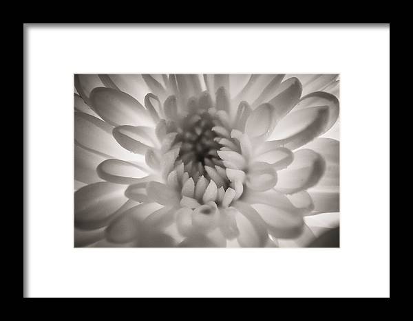 Flowers Framed Print featuring the photograph White by Angela Aird