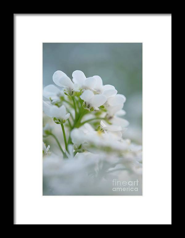 White Framed Print featuring the photograph White Flower Close-up by Michelle Himes