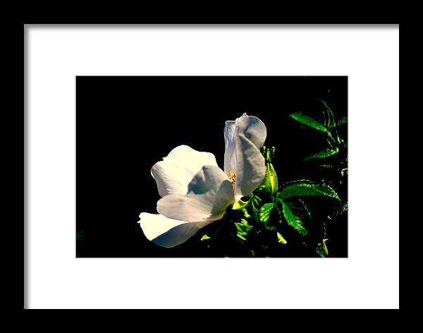 Framed Print featuring the photograph White Flower by Robert Scauzillo