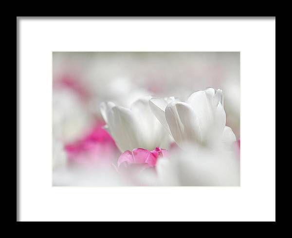 Atlanta Framed Print featuring the photograph White Tulips by Mark Chandler