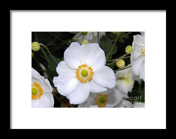White Framed Print featuring the photograph White Wonder by David Lee Thompson
