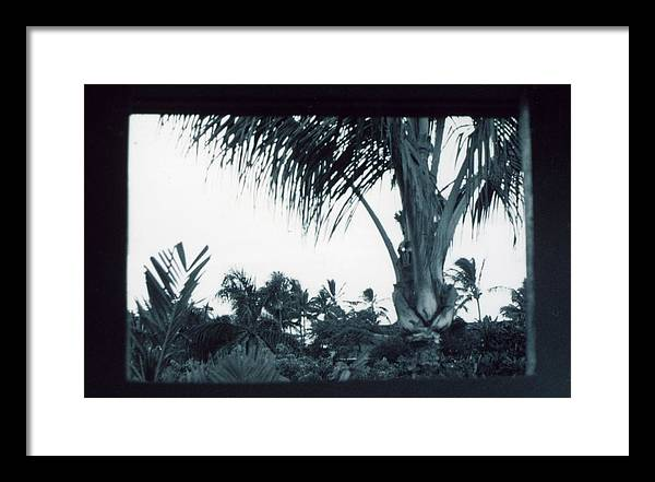 Palm Tree Framed Print featuring the photograph Window To Paradise by Jennifer Ott