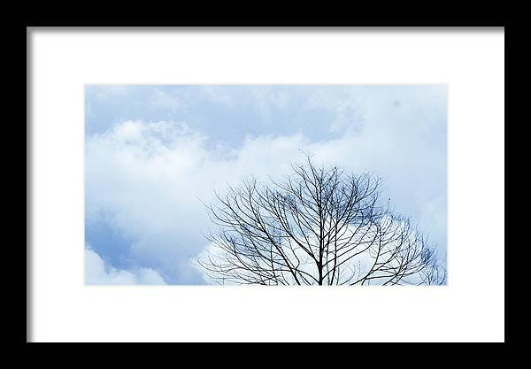 Winter Fall White Sky Framed Print featuring the photograph Winter Tree by Adelista J