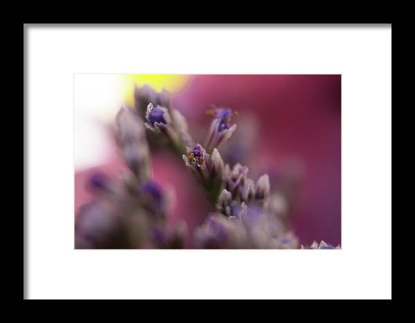 Day Framed Print featuring the photograph All Wrapped Up by Marnie Patchett