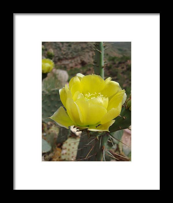 Flower Framed Print featuring the photograph Yellow Cactus Flower by Tong Steinle