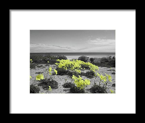 Flowers Framed Print featuring the photograph Yellow by Douglas Barnard