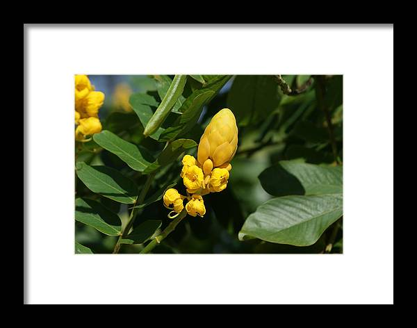 Flowers Framed Print featuring the photograph Yellow by Lois Lepisto