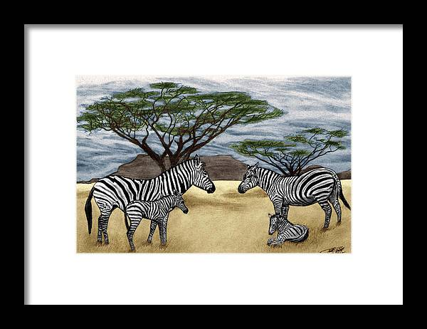 Zebra African Outback Framed Print featuring the drawing Zebra African Outback by Peter Piatt