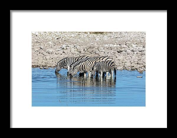 Okaukuejo Framed Print featuring the photograph Etosha - Namibia by Joana Kruse
