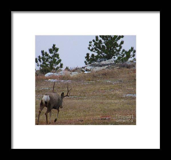 Deer Framed Print featuring the photograph 10 Point Buck Heads West by Jeff Birr