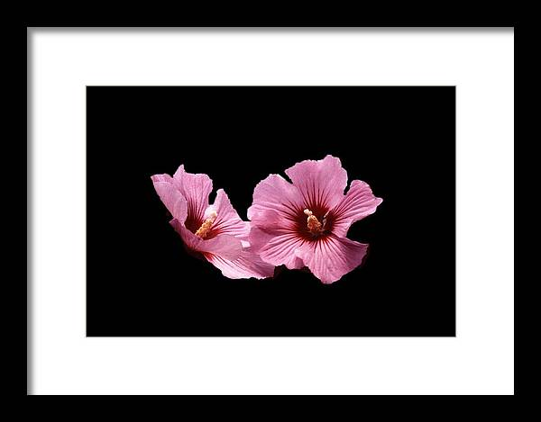 Flower Framed Print featuring the photograph 102708-1 Standing Out by Mike Davis