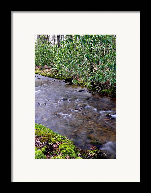 West Virginia Framed Print featuring the photograph Middle Fork Of Williams River by Thomas R Fletcher