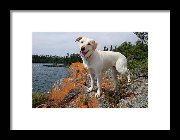 Horseshoe Bay Island Framed Print featuring the photograph Betsy On Horseshoe Bay Island by Sandra Updyke