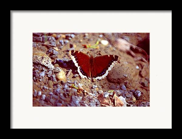 Butterfly Framed Print featuring the photograph 113093-1 by Mike Davis