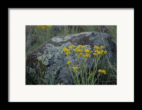 Flowers Framed Print featuring the photograph Untitled by Kathy Schumann