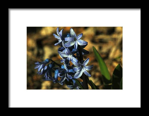 Nature Framed Print featuring the photograph Untitled by Paul Gavin