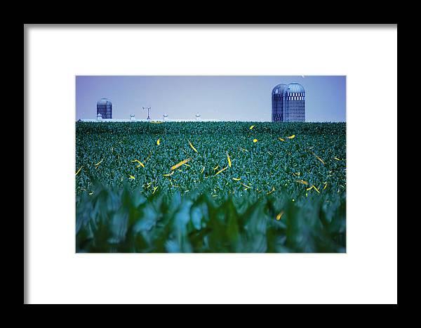 Fireflies Framed Print featuring the photograph 1306 - Fireflies - Lightning Bugs Over Corn by Seth Dochter