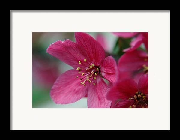 Flora Framed Print featuring the photograph Untitled by Kathy Schumann