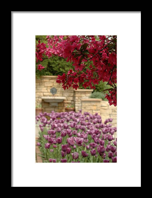 Tulips Framed Print featuring the photograph Untitled by Kathy Schumann