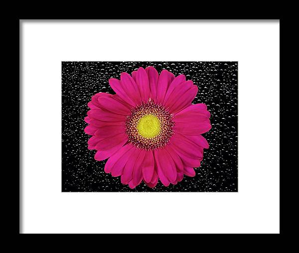 Flower Framed Print featuring the photograph Flower by FL collection