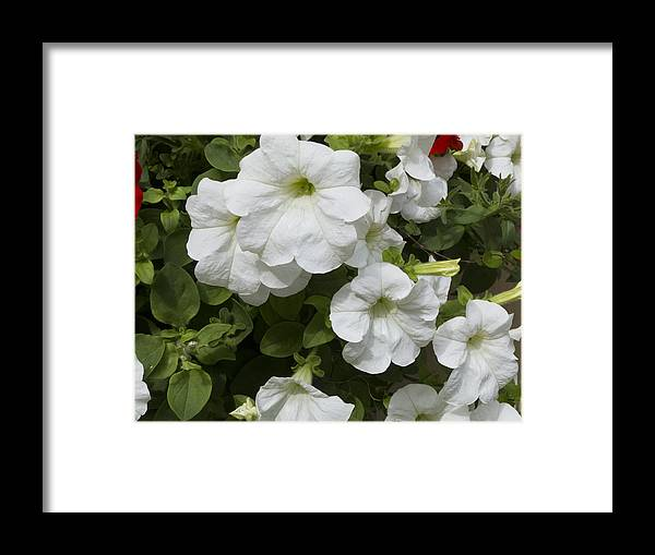 Flowers Framed Print featuring the photograph ,, Flowers ,, by Ricardas Marcinkevicius