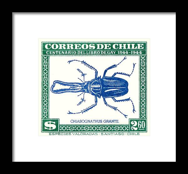 1948 Chile Stag Beetle Postage Stamp Framed Print By Retro Graphics