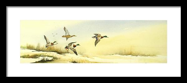 Mallard Ducks Framed Print featuring the painting Flying Over by Lynne Parker