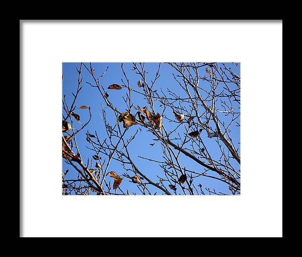 Nature Framed Print featuring the photograph Autumn Wind by Marilynne Bull