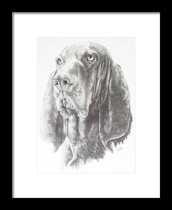 Purebred Dogs Framed Print featuring the drawing Black And Tan Coonhound by Barbara Keith