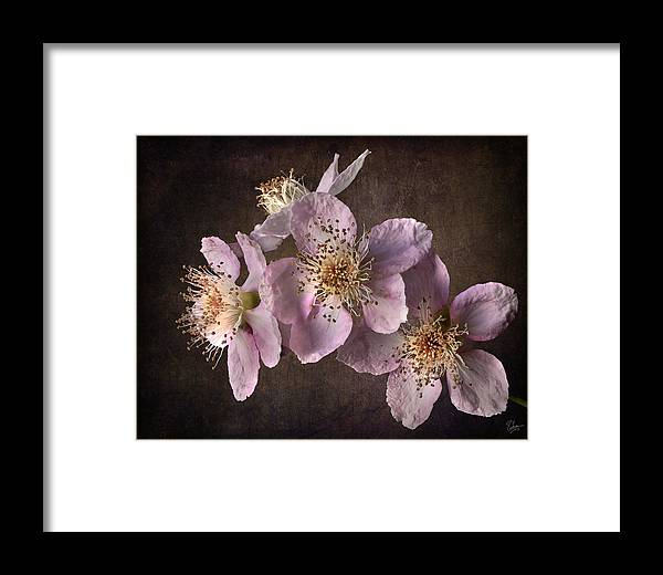Flower Framed Print featuring the photograph Blackberry Flowers by Endre Balogh