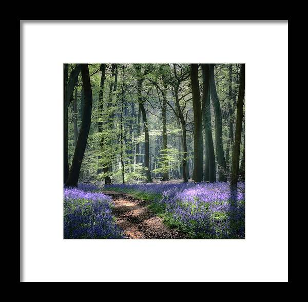 Bluebells Framed Print featuring the photograph Bluebell Path by Ceri Jones
