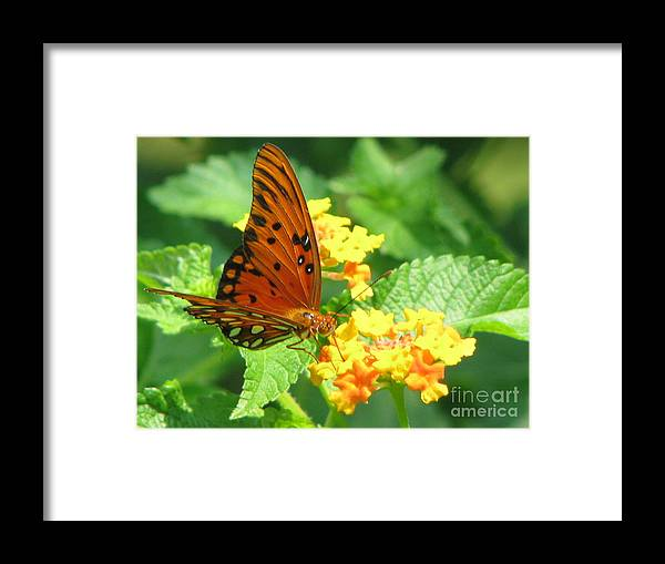 Butterfly Framed Print featuring the photograph Butterfly by Amanda Barcon