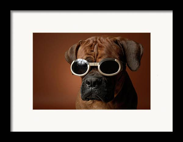 Horizontal Framed Print featuring the photograph Dog Wearing Sunglasses by Chris Amaral