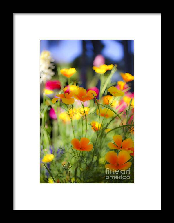 Yellow Framed Print featuring the photograph Flowering Garden by Gal Eitan