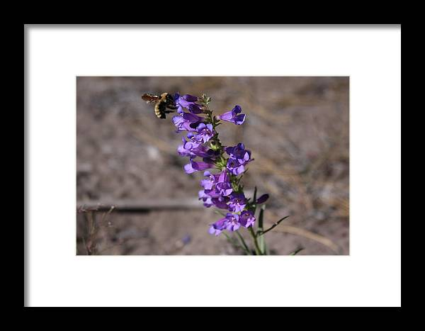 Flowers Framed Print featuring the photograph Flowers by Luke Robertson