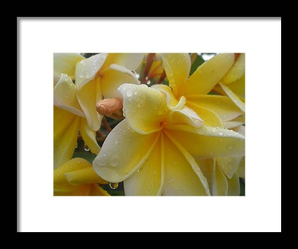 Flowers Framed Print featuring the photograph Flowers by Robert Cunningham