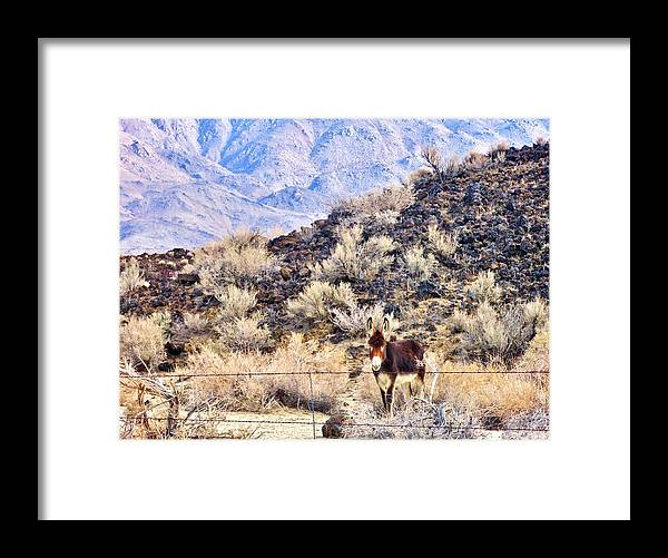 Mountains Framed Print featuring the photograph Hello by Marilyn Diaz