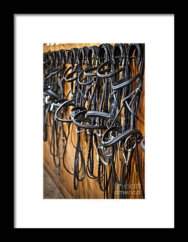 Bridles Framed Print featuring the photograph Horse Bridles Hanging In Stable by Elena Elisseeva