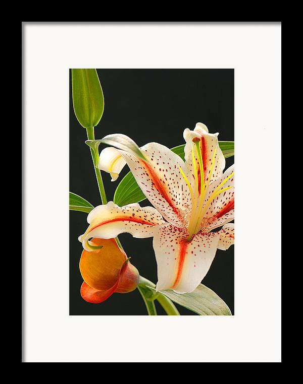 Lily Framed Print featuring the photograph Lily by Dennis Hammer
