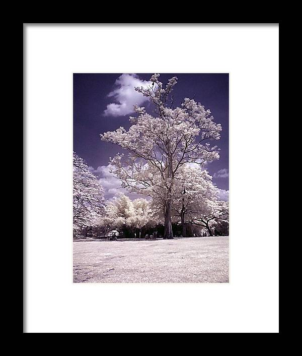 Infrared Framed Print featuring the photograph Magic Garden by Galeria Trompiz