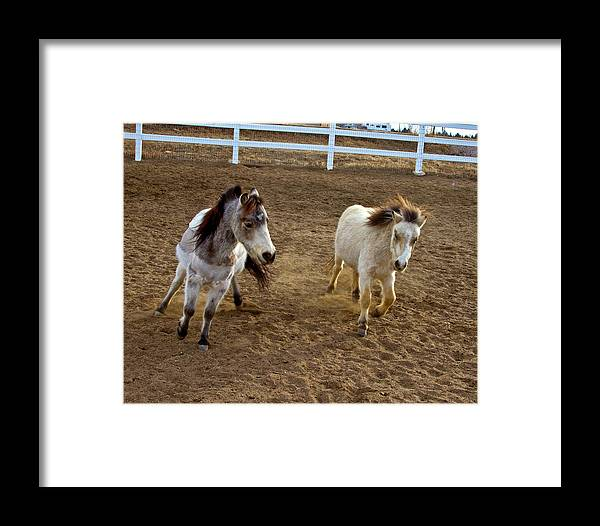 Agriculture Framed Print featuring the photograph Miniature Horse by Crystal Garner