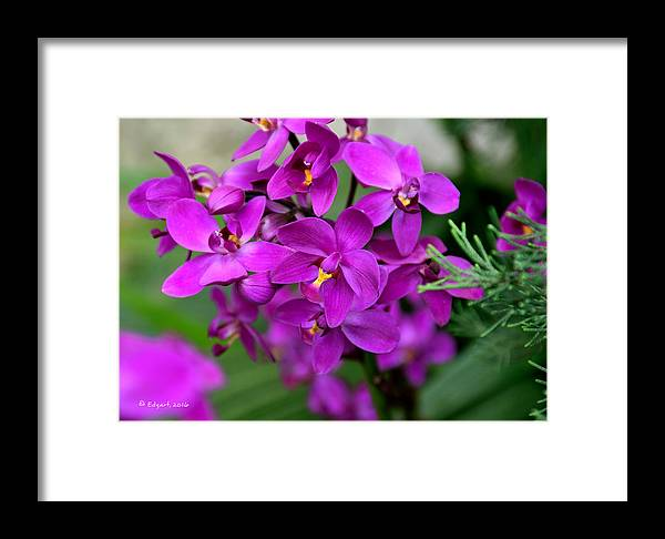 Flower Framed Print featuring the photograph No Title by Edgar Torres