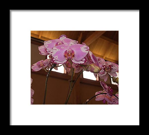 Orchid Framed Print featuring the photograph Orchid by Laurie Prentice