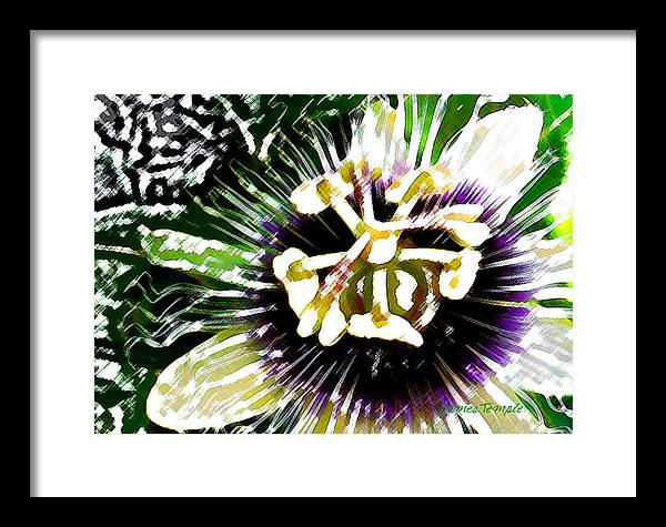 Passion Fruit Flower Framed Print featuring the digital art Passion Flower by James Temple