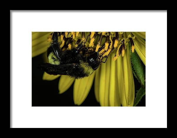 Jay Stockhaus Framed Print featuring the photograph Pollen Collector 3 by Jay Stockhaus
