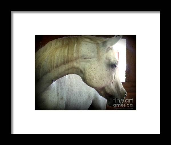 Horse Framed Print featuring the photograph Sasa by Rabiah Seminole