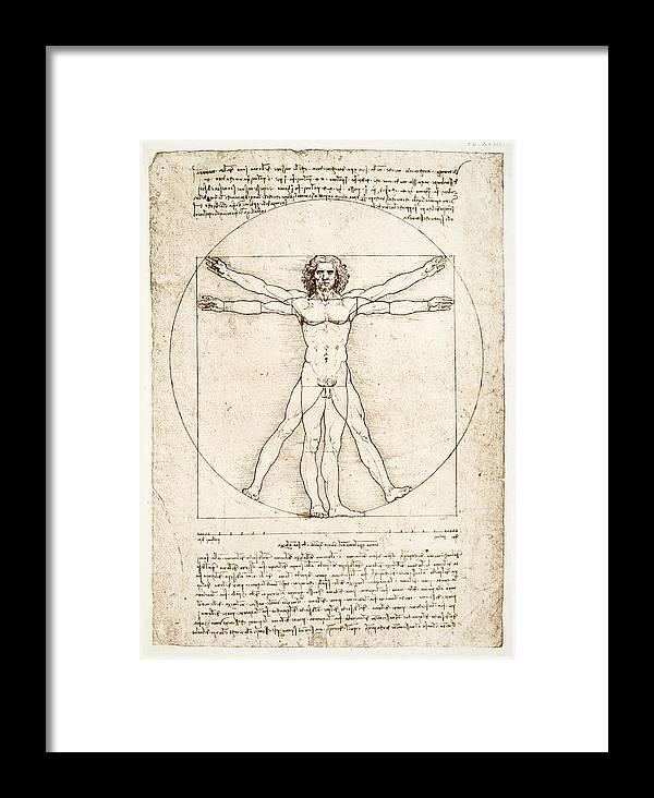 Leonardo Da Vinci Framed Print featuring the painting The Proportions Of The Human Figure by Leonardo Da Vinci