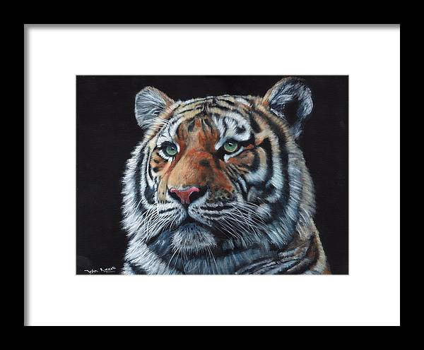 Tiger Framed Print featuring the painting Tiger Portrait by John Neeve