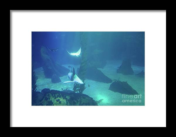Underwater Framed Print featuring the photograph Underwater Blue Background by Benny Marty