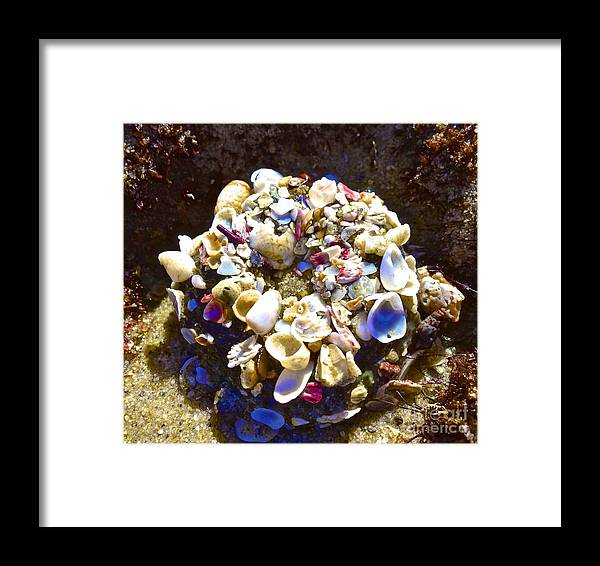 Sea Shells Ocean Water Framed Print featuring the photograph Untitled by Cate